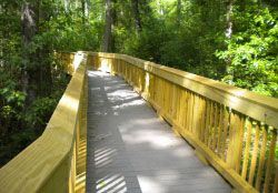 Walking Bridge at Great Dismal Swamp Refuge
