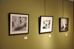 Three Photos Hanging in the Gallery